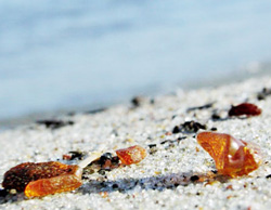 natural baltic amber at the baltic sea